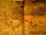 Píseň o lese - M. Válek a J. a Z. Vlach