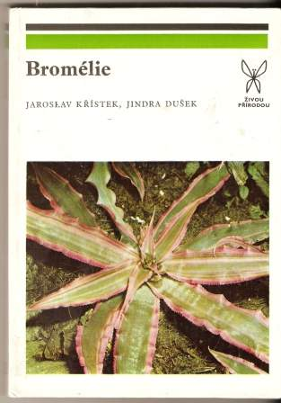 Bromélie